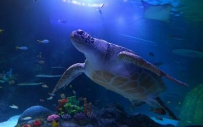 SEA LIFE Manchester Aquarium – Standard Ticket