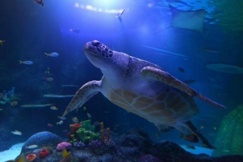 SEA LIFE Manchester Aquarium – Standard Ticket