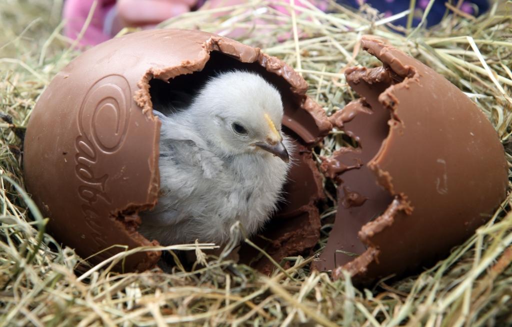 Easter-Family-Eggstravaganza-The-BIG-Sheep-Bideford-Devon
