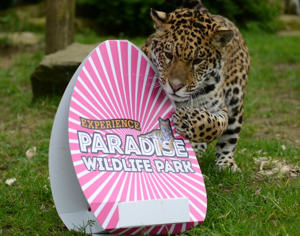 Easter-Event-Paradise-Wildlife-Park-Broxbourne