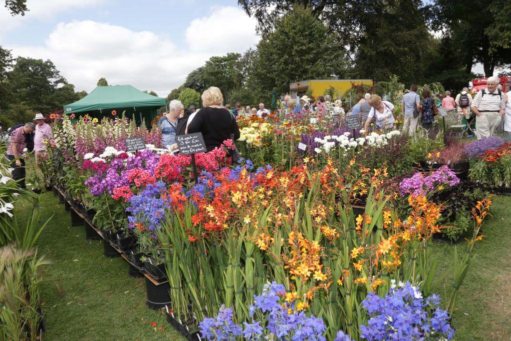Shrewsbury-Flower-Show-Shropshire