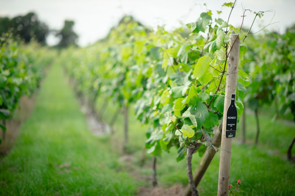 UK-Vineyard-Holidays-North-Yorkshire