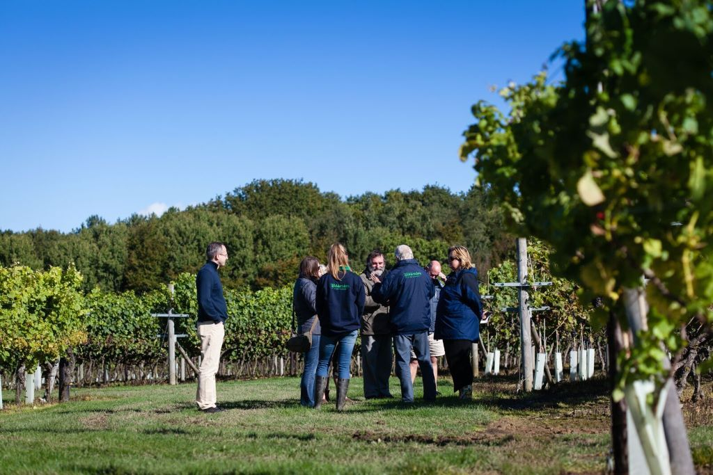 UK-Vineyard-tours-Biddenden-Kent