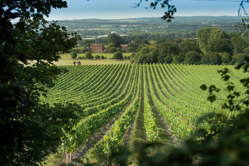 Wine-Holiday-Chapel-Down-Vineyard-Tenterden
