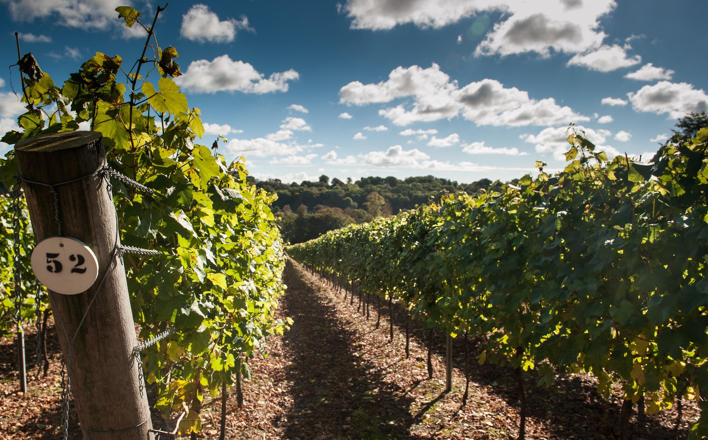 UK-Vineyards-Hambledon-Hampshire