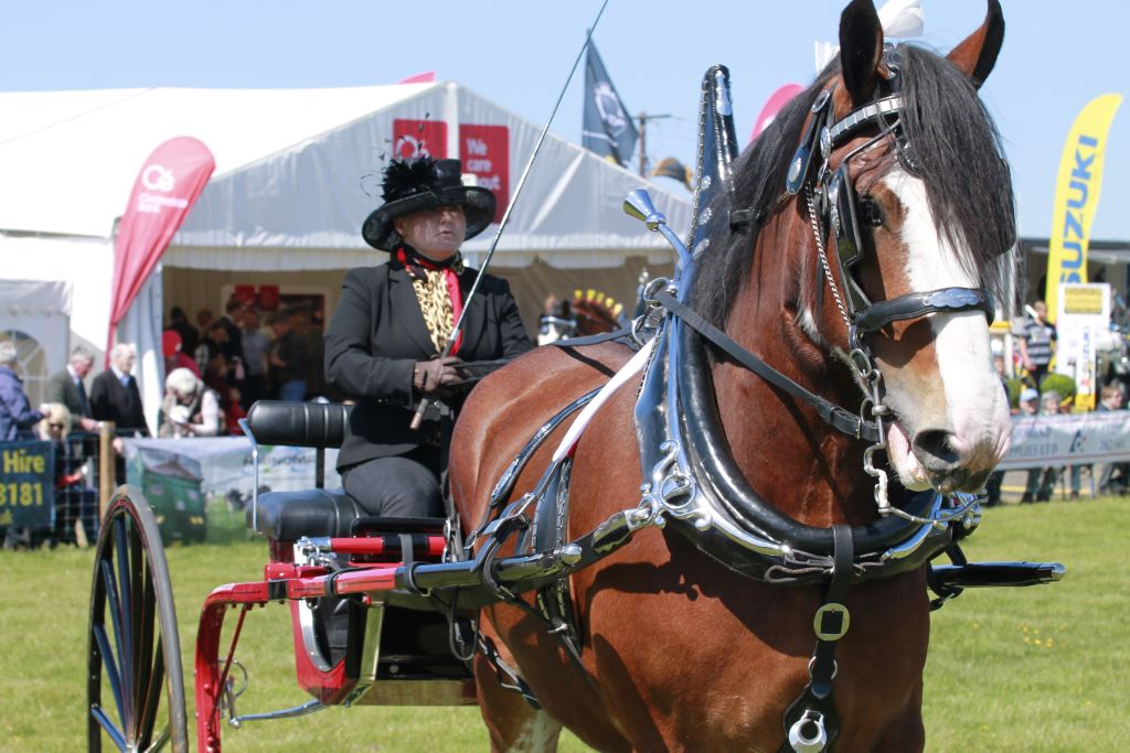 May-Events-Ayrshire-Ayr-County-Show