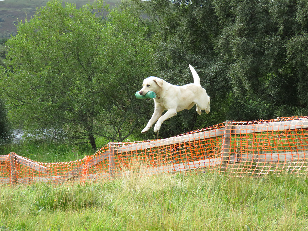 UK-Events-August-Highland-Field-Sports-Fair-Inverness