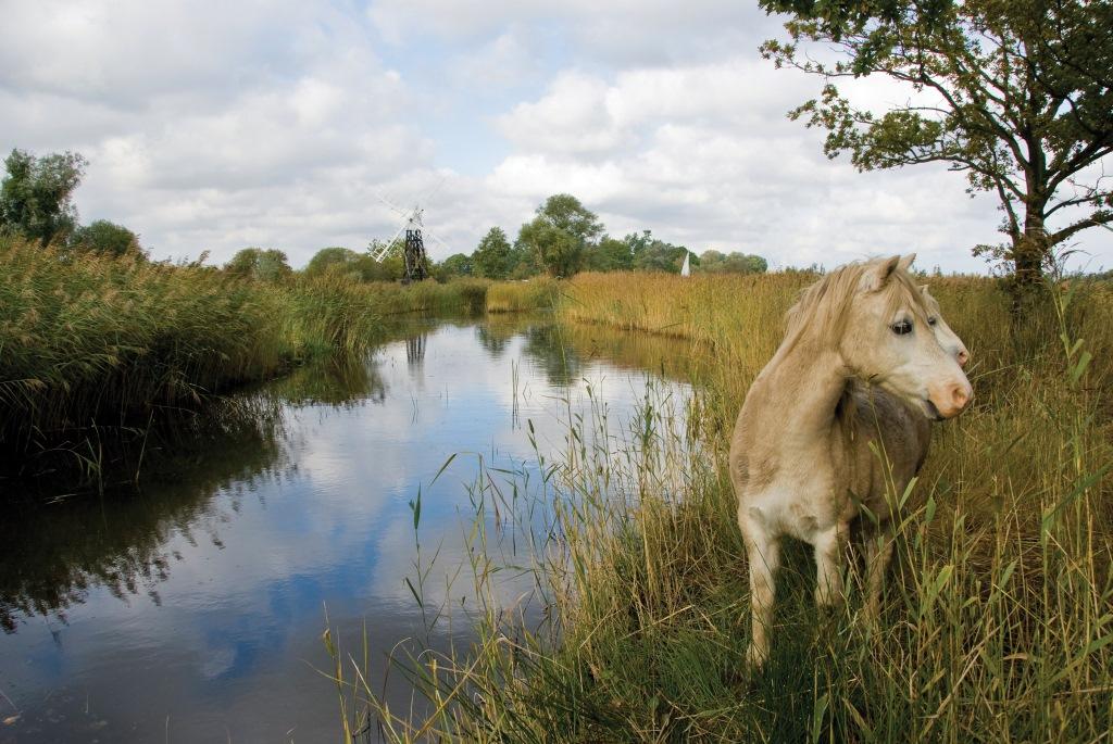 Horse-Riding-Destinations-UK-Norfolk