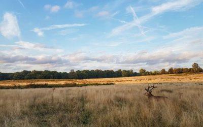 Richmond Park – Home to 630 deer