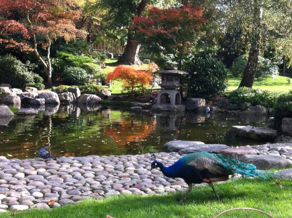 Kyoto Garden – A taste of Japanese tranquility