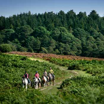 Two Hour New Forest Horse Riding