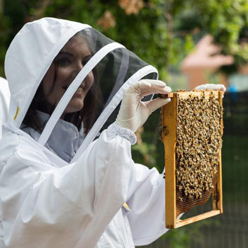 Urban Beekeeping & Craft Beer Tasting