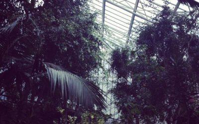 Barbican Conservatory – Still summer inside
