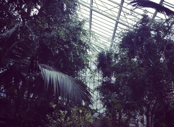 Barbican Conservatory – Still summer inside