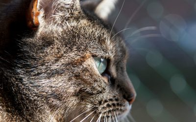City envy: we want a floating cat sanctuary like Amsterdam