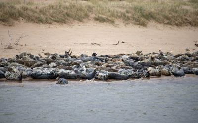 Seal spotting in Scotland at Newburgh Beach, Aberdeenshire