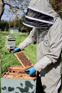 Beekeeping with Anglesey Bees