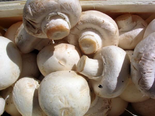 Mushrooms are delicious in risotto!